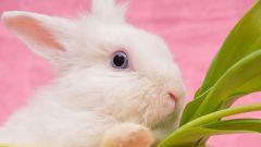 Как ухаживать за домашними кроликами