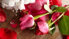 Как подарить розовые розы
