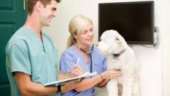 Как делать укол собаке