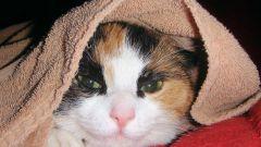 Как лечить мочекаменную болезнь у кошек