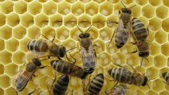 Как приготовить канди для пчел