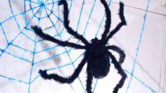 Как связать паутину