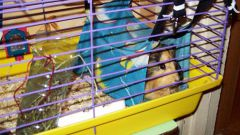 How to make a hammock for your Guinea pigs