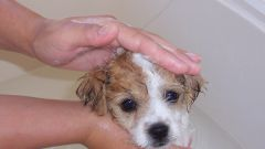 How to wash a puppy