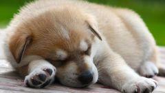 Как повысить иммунитет собаки