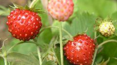 Как нарисовать ягоды