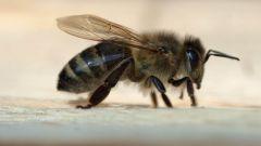 Как кормить пчёл зимой и чем