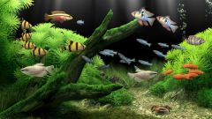 Как сделать каркасный аквариум