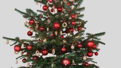 Как сохранить дольше живую елку