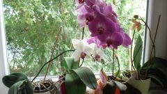 How to transplant and care for your Orchid