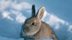 Как поить кроликов зимой