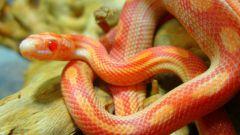 Как содержать змей