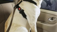 How to transport a dog in the car