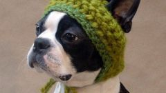 How to sew a hat for a dog