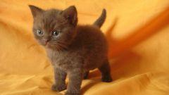 Как устранить запах кошки
