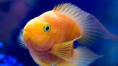 How to get rid of turbidity in the aquarium