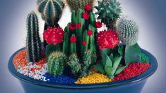 Как приручить кактус