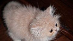 Как воспитать котенка ласковым