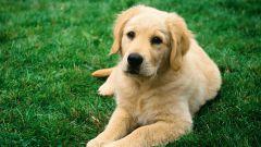 Как сбить температуру у собаки