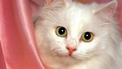 How to give mineral oil to cats