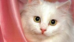 Как давать вазелиновое масло кошкам
