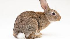 Как вылепить зайца