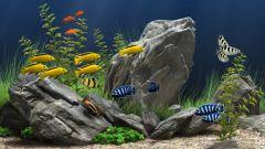 Как фотографировать аквариум