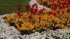 Как сделать цветочную клумбу