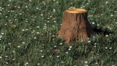 How to remove tree stump