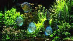 Как понизить жесткость в аквариуме