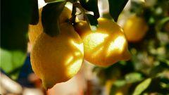 Как повысить кислотность желудочного сока