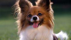 Как назвать маленькую собаку