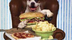 Как улучшить аппетит собаки