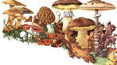 Как отличить ядовитые грибы