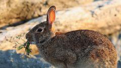 Как ставить силок на зайца