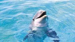 Как назвать дельфина