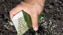 Как обеззаразить почву
