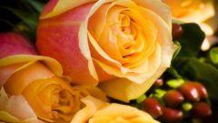 Как отпоить розы