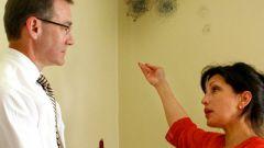 Как уничтожить грибок на стенах
