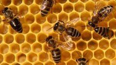 Как поставить ловушку на пчел