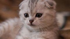 Как научить котенка есть и пить