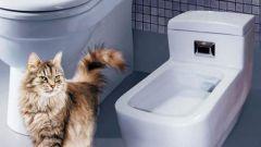 Как убрать запах мочи кота