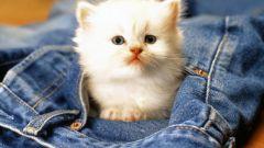 Как лечить запор у котят