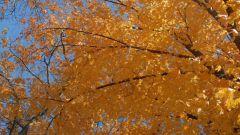 Как определить по листьям дерево