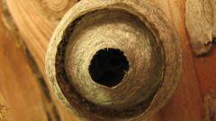Как уничтожить осиные гнезда