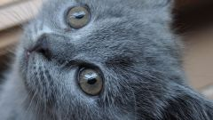 Как давать вазелиновое масло котенку