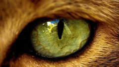 How to treat cats from conjunctivitis