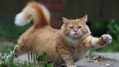 Что делать, если кот метит