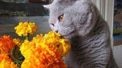 Как удалить запах от кошачьей мочи