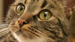 What to do when a cat sneezes